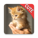 CUTE CATS Memory matching Game 1.74 MOD APK