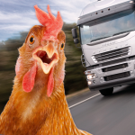 🇺🇸Chicken Simulator🐓: Crossy Road 3d, Rush Hour 1.5.1 MOD APK