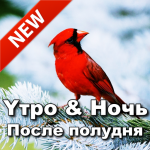 Russian Good Morning Afternoon & Good Night Wishes 9.08.17.2 MOD APK