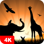 Animal Wallpapers 4K 5.0.62 MOD APK