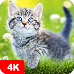 Cat Wallpapers & Cute Kittens 5.0.62 MOD APK