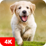 Dog Wallpapaers & Puppy Backgrounds 5.0.62 MOD APK
