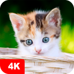 Kitten Wallpapers 4K 5.0.62 MOD APK