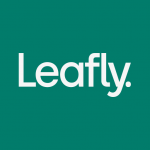 Leafly: Find your cannabis and CBD 7.11.1 MOD APK