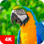 Parrot Wallpapers 4K 5.0.62 MOD APK
