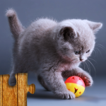 Cats Jigsaw Puzzles Games – For Kids & Adults 😺🧩 25.2 MOD APK
