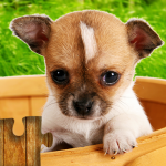 Dogs Jigsaw Puzzles Game – For Kids & Adults 🐶 26.4  MOD APK