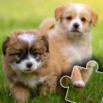 Dogs & Cats Puzzles for kids & toddlers 2 🐱🐩 2021.44 MOD APK