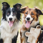 Dogs & Cats Puzzles for kids & toddlers 🐱🐩 🐾 2021.89 MOD APK